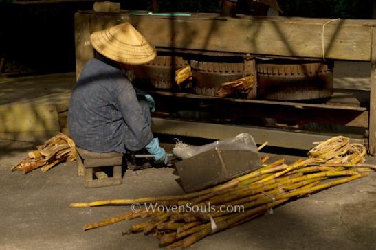 Ryukyu-sugarcane extraction--6