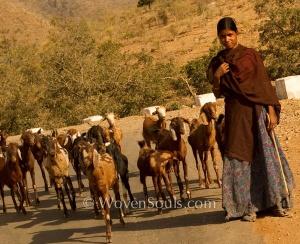 The Kalbelia Gypsy Tribe of Rajasthan