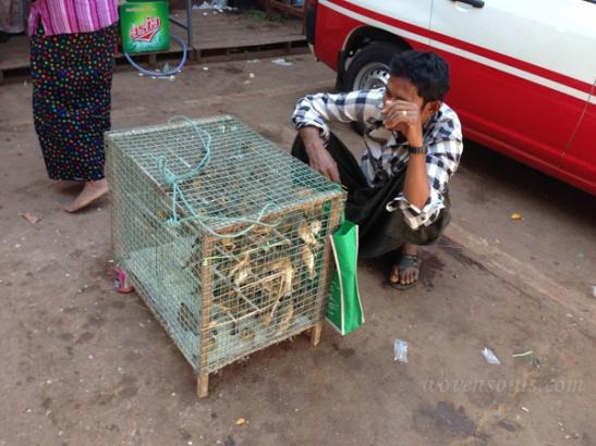Bagu Burma IMG_5453-2