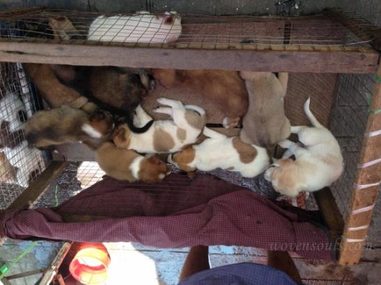 Yangon IMG_5381